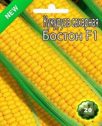 Як садити кукурудзу