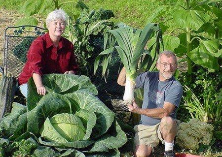 Підгодівля для овочів, готуємо меню для кожної грядки