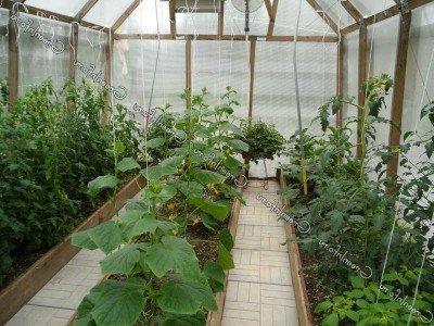 Вирощування овочів в теплиці